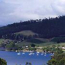 Cygnet in Tasmania by Kirsten H