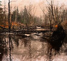 A WALK IN THE WOODS by MichaelDTaylor