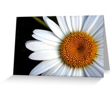 In the Eye of the Daisy Greeting Card