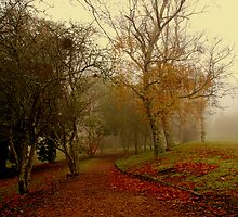 Fog Walk by KeepsakesPhotography Michael Rowley