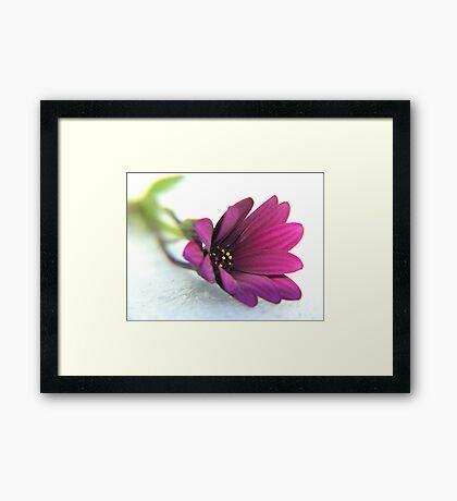 purple delight ... Framed Print