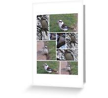 Kookaburras Feeding Greeting Card