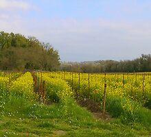 Path Through The Mustard Fields by Tom  Reynen