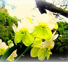 Orchids by Megumi Powell