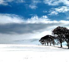 Trees, snow and shadows by Calum Davidson