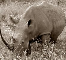 The Safari Series - 'Rhino' by Paige