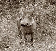 The Safari Series - 'Warthog' by Paige
