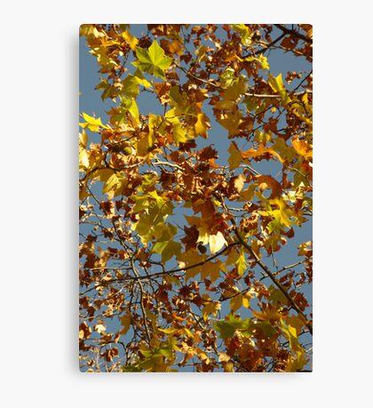 Autumn Leaves, Melbourne Canvas Print