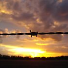 Barbed Wire by Chris Kean