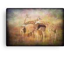 A Tangle of Giraffe Canvas Print