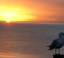 Seagul Sunset by Chris Kean