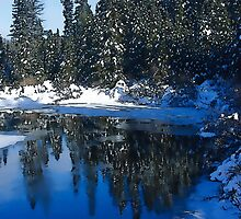 Cool Blue Shadows - Riverbank Winter Forest by Georgia Mizuleva