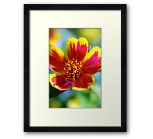 Red Fire Flower Framed Print