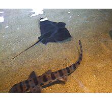 monterey bay aquarium Photographic Print