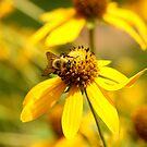 Yellow On Yellow by DARRIN ALDRIDGE