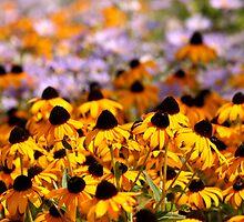 Yellow Cone Flowers in a Field by DARRIN ALDRIDGE