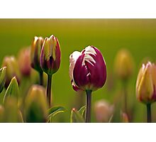 Golden Green Glow Of Spring. Photographic Print