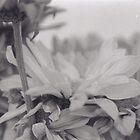 Velvet Petals by UrbaniqueArt