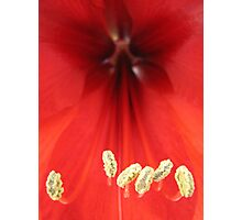 Amarillas Stamen Photographic Print