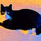 Dapper Cat by suzannem73