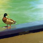 Mallard 2 by Barry W  King