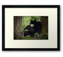 Cades Cove Bear III Framed Print