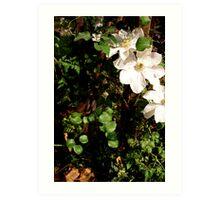 Orchid Garden Art Print