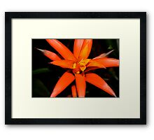 Orange Spike Framed Print