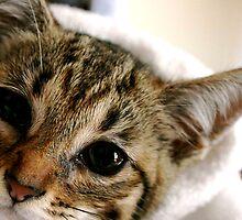 Saved Kitten by Jill Sprague