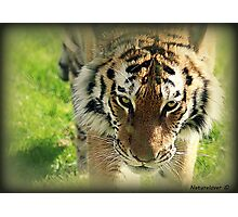 Beauty Is The Beast Photographic Print