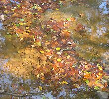 Fallen Leaves by Kathryn Short