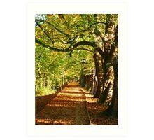Pathway In The Woods Art Print