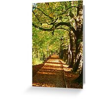 Pathway In The Woods Greeting Card
