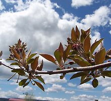 Crab Apple Branch by Katie  Marie