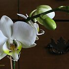 white phalenopsis by foozma73
