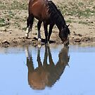 Wild Reflection by Gene Praag