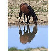 Wild Reflection Photographic Print