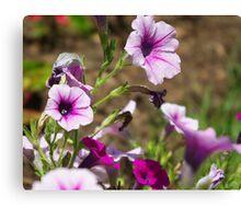 pale purple Canvas Print