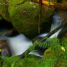 Another Part of a Stream Near Noojee by Tony Lin