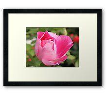 Soft Petals Framed Print