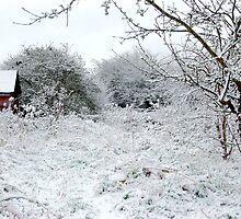April Snow by mikepom