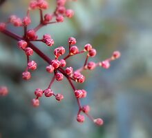 Pink by rosedew