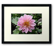 Soft Pink Petals Framed Print