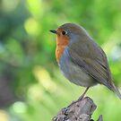 Robin by Ann Heffron