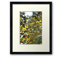 Black Eyed Susan Flowers Framed Print
