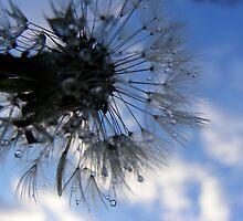 Make a Wish by K Gilks