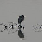 Heron at Rest by AmishElectricCo