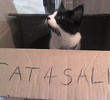 cat for sale. by PhoneBugger