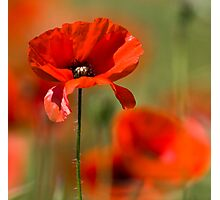 Poppy Haze Photographic Print