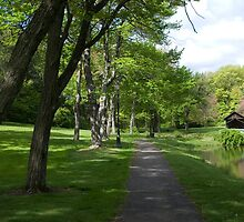A Spring Walk by bunnij